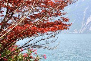 La Dolce Vita am Gardasee: Limone